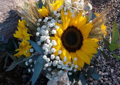 Sunflower, wheat & Babies breathe